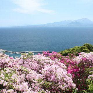 写真:春(3)