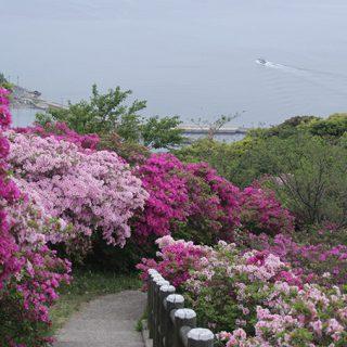写真:五本松公園(5)